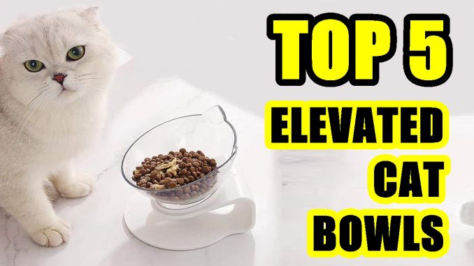 TOP 5: Best Elevated Bowl for Cat 2021 | with No-Spill Pads