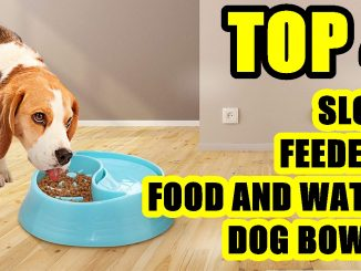 TOP 4: Best Slow Feeder Food and Water Dog Bowl 2021 | for Small, Medium and Large Dog